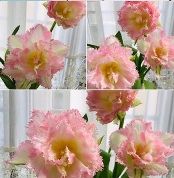 tulip20210401.jpeg